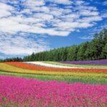 O plewieniu kwiatów